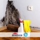 Get Rid Of Mold