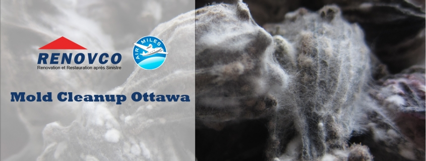 mold cleanup Ottawa